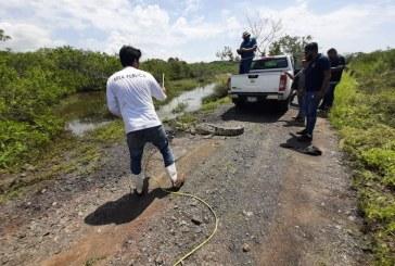 Liberan cocodrilo rescatado de las playas mazatlecas