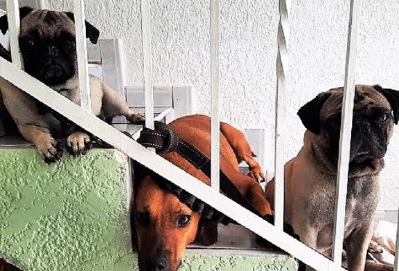 """The inhabitants of """"Friends of the Animals"""" Need Us/Los Habitantes de """"Amigos de los Animales"""" nos Necesitan"""