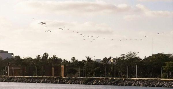 Día Mundial de las Aves Migratorias 2021 1