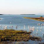 Día Mundial de las Aves Migratorias 2021