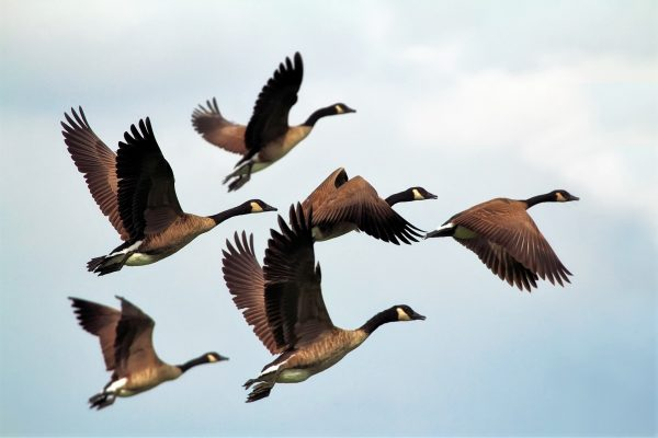 Día Mundial de las Aves Migratorias 2021 3
